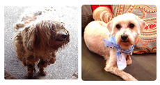 """<div class=""""source"""">Stevie Lowery</div><div class=""""image-desc"""">Pictured, left, is what Scruffy looked like when he showed up in my front yard. Right, is what he looked like after he was groomed and pampered by Wilson's Mobile Pet Grooming Service.</div><div class=""""buy-pic""""><a href=""""http://web2.lcni5.com/cgi-bin/c2newbuyphoto.cgi?pub=015&orig=01-08-14_column_scruffy.jpg"""" target=""""_new"""">Buy this photo</a></div>"""
