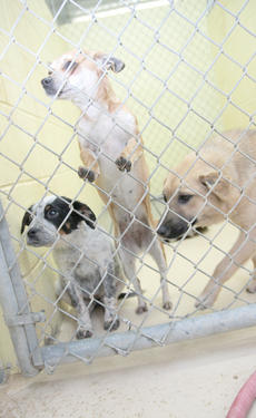 """<div class=""""source"""">Stephen Lega</div><div class=""""image-desc"""">The Marion County Animal Shelter is overrun with dogs because several people have been dumping them at the Marion-Taylor County line.</div><div class=""""buy-pic""""><a href=""""http://web2.lcni5.com/cgi-bin/c2newbuyphoto.cgi?pub=015&orig=01-25-12%2Bshelter%2Band%2Bjail%2Bpic.jpg"""" target=""""_new"""">Buy this photo</a></div>"""