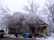 "<div class=""source"">Stephen Lega</div><div class=""image-desc"">The weight of the ice caused tree limbs to collapse due to the added weight, sometimes even on top of houses. </div><div class=""buy-pic""><a href=""/photo_select/32638"">Buy this photo</a></div>"