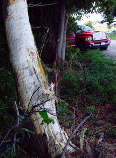"<div class=""source"">Stephen Lega</div><div class=""image-desc"">The truck collided with at least one tree before coming to a stop on Short Line Pike.</div><div class=""buy-pic""></div>"