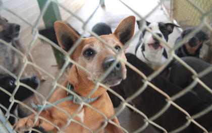 The Marion County Animal Shelter became overcrowded due to a high number of dogs being dumped near the Marion-Taylor County line.