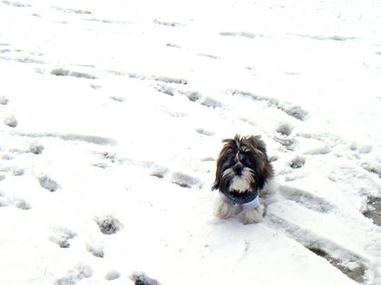 Amy Riney submitted this photo of her puppy playing in the snow.