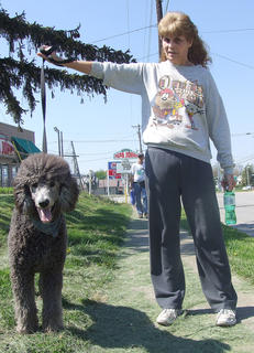 Kolbie, a poodle, pauses with his owner, Blenda Wilson.