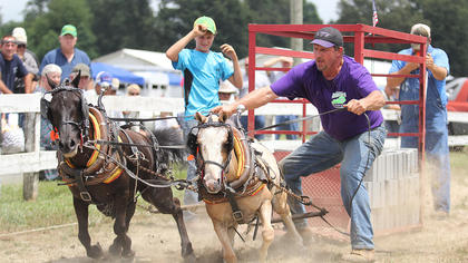 Todd Armes shouts at the ponies as they pull bricks in the pony pull.