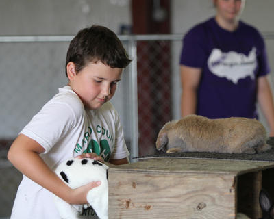 Nick James places his rabbit in its cage during the rabbit show.