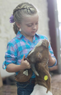 Miley Francis, 5, of Perryville gets her goat under control before the novice showmanship class.