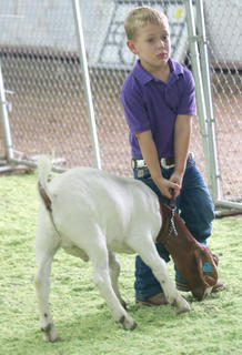 Grant Holman, 4, of Perryville learns the hard way that not every goat is easy to move.