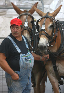 Wallace Gassaway keeps an eye on Pat and Bill between turns in the mule pull.