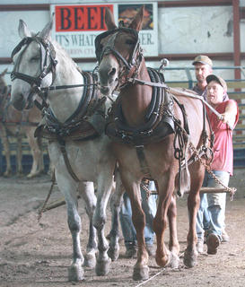 Troy Montgomery guides his mules Andy and Amos to the sled in the under 2,200-pound class.