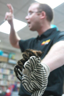 "Opferman uses a glove to hold ""Charlotte,"" a Brazilian bird-eating tarantula."