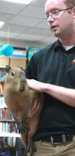 "Opferman holds ""Happy"", a 1-year-old capybara. Opferman explained that adult female capybara's can weight up to 120 pounds and adult males can weigh up to 150 pounds."