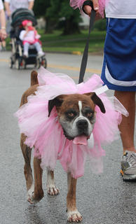 Several dogs tolerated tutus during the fun run.