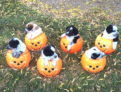 "Jackie Mattingly submitted this photo of the cutest little ""pupkins."""
