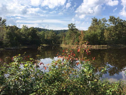 Mary Ann Ohsol took this photo at her pond in St. Francis on Oct. 5.