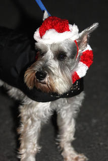 This dog was in the Christmas spirit.