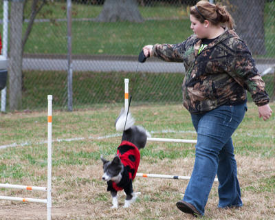 Addie Thomas with her dog Foxy owned the obstacle course. Here, Foxy lands on her font paws after leaping over a challenge on the second part of the course.