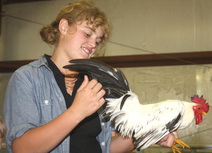 Codie Robinson holds a black-tailed Japanese Bantam Rooster during the poultry show at the Marion County Fair Friday evening.