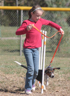 Shelby Mattingly guides her beagle, Jumper, through the agility course.