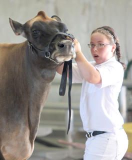 Elise Carpenter of Russell Springs attempts to keep her cow in check. She eventually won the showmanship ages 9-11 competition.