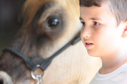 James Lucas, 7, of Lebanon waits with his cow Suzie before the novice showmanship competition.