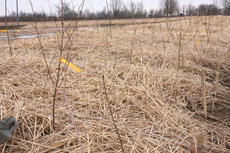"""<div class=""""source"""">Stephen Lega</div><div class=""""image-desc"""">A few months ago, a group of 300 TG Kentucky employees planted 1,100 trees to learn the method they will be use during the March 23 tree-planting event. </div><div class=""""buy-pic""""><a href=""""/photo_select/32658"""">Buy this photo</a></div>"""