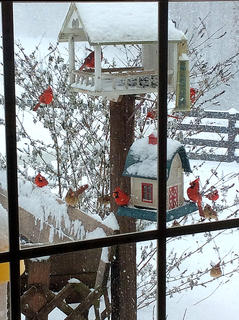 These cardinals were trying to take cover and find something to eat during blizzard-like conditions Friday.