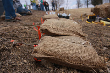 The seedlings were stacked neatly at each area that needed to be planted. The taller types of trees have red ribbons, and the shorter trees have yellow ribbons.