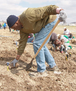 Marvin Scott with a Boy Scout troop from Springfield loosen up some of the harder soil.