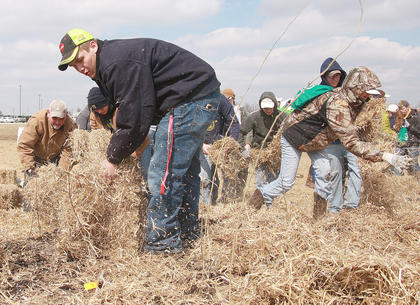 Jordan Garrett scatters hay to provide a covering for seedlings. Garrett was a volunteer with the Marion County FFA.