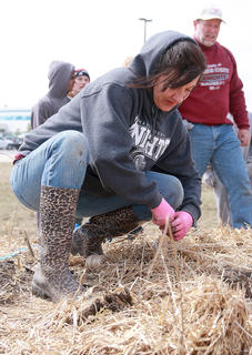 Joanie Bradshaw ties rope around some bamboo stakes as the final step in the tree planting process.