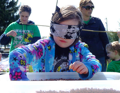 Meagan Porter, 6, of Willisburg digs through a container of beans in search of a prize.