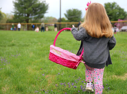 The annual Easter egg hunt at Graham Memorial Park in Lebanon was held this past Saturday. Annabelle Humphrey carries her bright pink Easter basket while searching for candy-filled eggs Saturday morning. She is the 2-year-old daughter of Brandi and Jeremy Humphrey.
