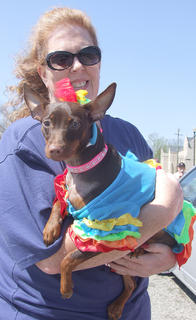 Foxie, a miniature pincher, was named the best dressed dog at Strut Your Mutt. Foxie's owner is DeeDee Kaiser.
