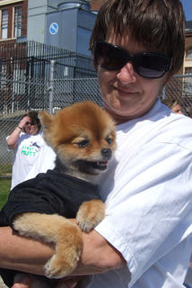 Debbie Higdon holds Lil Man, a Pomeranian, who was named the cutest dog at Strut Your Mutt.