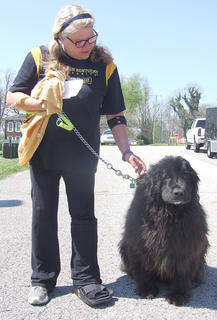 Sabrina Bear, a Newfoundland, was named the biggest dog at Strut Your Mutt. She belongs to Billie Jo and Hattie Clark.