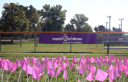 The annual fundraiser for the March of Dimes - March for Babies - was held at Graham Memorial Park in Lebanon Saturday, Sept. 22. The March of Dimes supports research to help premature babies. One hundred and sixty nine purple flags were placed in the ground at Graham Memorial Park to represent the number of babies that were born prematurely in Kentucky last week. For more information about the March of Dimes, call 1 (800) 670-3339 or visit www.marchforbabies.org.