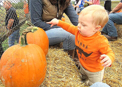 Photo by Brad Tharp Gage Tharp enjoys the pumpkins at Devine's Corn Maze in Harrodsburg. Gage is the son of Brad and Michelle Tharp of Lebanon.