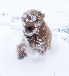 Booker enjoys his first snow day.