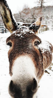 A rescue donkey enjoys the weather on 'Til the Rooster Crows Ranch.