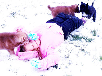 Brookelynn Riggs, 6, plays with Husky puppies.