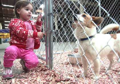 Aubrey Benningfield, 2, of Lebanon is captivated by Pork Chop at the Marion County Animal Shelter's booth.