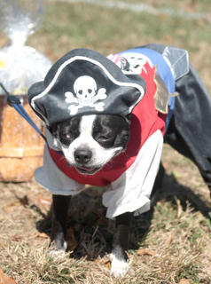 . Sophie, a Boston terrier, won the costume contest.
