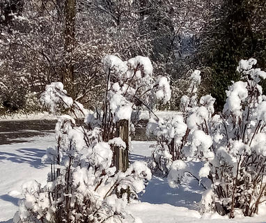 Shirley Johnson in Springfield took this photo of the snow on March 12.