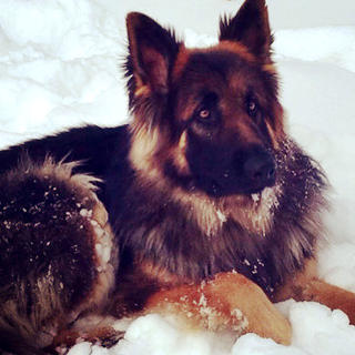 Trish Wathen submitted this photo of her dog, Conway, chillin' in the snow on Feb. 17.